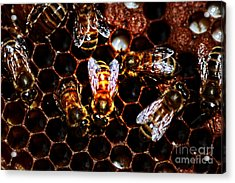 Bee's Work Acrylic Print by David Taylor