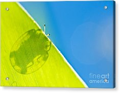 Beetle And Blue Sky Acrylic Print by Peerasith Chaisanit