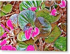 Begonia Acrylic Print by EricaMaxine  Price
