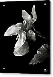 Begonia In Black And White Acrylic Print by Endre Balogh