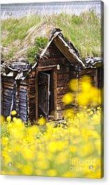 Behind Yellow Flowers Acrylic Print by Heiko Koehrer-Wagner