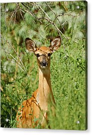 Being Watched Acrylic Print by Ernie Echols