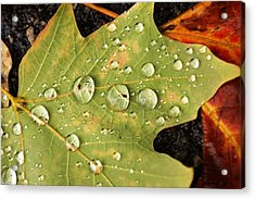 Bejeweled Leaves Acrylic Print by Matthew Green