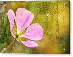 Believe Acrylic Print by Darren Fisher