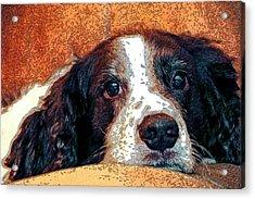 Bella Acrylic Print by James Steele