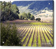 Acrylic Print featuring the photograph Bella Vineyards by Leslie Hunziker