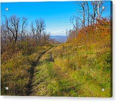 Belleayre Trail In Late Fall Acrylic Print by Kathryn Barry