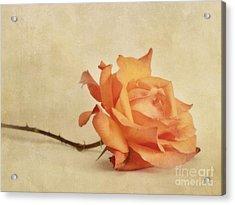 Bellezza Acrylic Print by Priska Wettstein