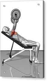 Bench Press Incline (part 1 Of 2) Acrylic Print by MedicalRF.com