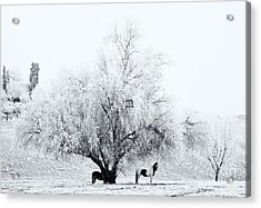 Beneath A Frosty Canopy Acrylic Print by Mike  Dawson