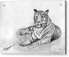 Bengal Tiger Acrylic Print by Shashi Kumar