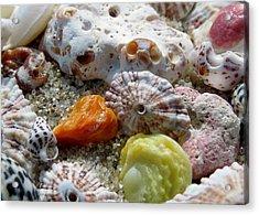 Bermuda Beach Shells Acrylic Print by Janice Drew