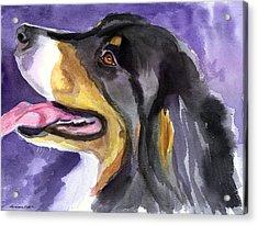 Berner Portrait Acrylic Print