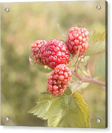 Berry Good Acrylic Print by Kim Hojnacki