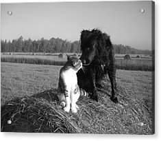 Best Buddies Black And White Acrylic Print