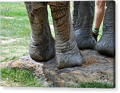 Best Foot Forward Acrylic Print by Joanne Kocwin
