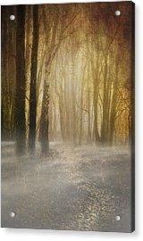 Beware Misty Woodland Path Acrylic Print by Meirion Matthias