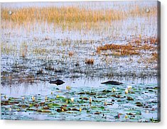 Beware Of Still Waters Acrylic Print by Jan Amiss Photography