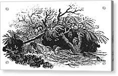 Bewick: Man Drowning Acrylic Print by Granger