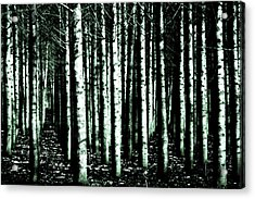 Beyond The Trees Acrylic Print by Terrie Taylor