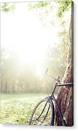 Bicycle Leaned On Big Tree In Sunlight. Acrylic Print by Guido Mieth