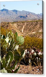 Big Bend Acrylic Print