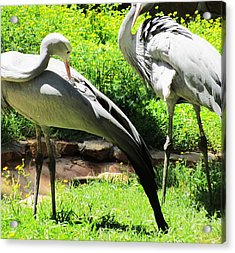 Big Birds Acrylic Print by Todd Sherlock