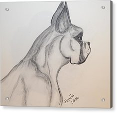Acrylic Print featuring the drawing Big Boxer by Maria Urso