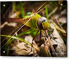 Acrylic Print featuring the photograph Big Brown Eyes by Cheryl Baxter