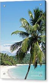 Acrylic Print featuring the photograph Big Corn Island Palm Tree Nicaragua by John  Mitchell