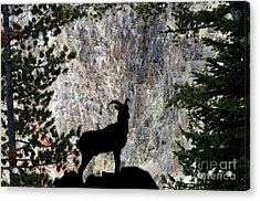 Acrylic Print featuring the photograph Big Horn Sheep Silhouette by Dan Friend