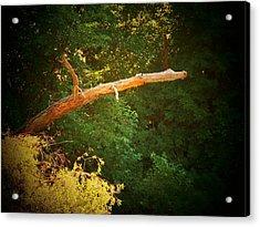 Big Log Acrylic Print by Joyce Kimble Smith