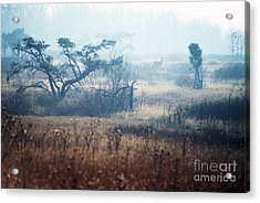 Big Meadows In Winter Acrylic Print by Thomas R Fletcher