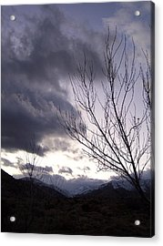 Big Morongo Canyon Acrylic Print by Christine Drake