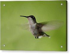 Big Star Humming Bird Acrylic Print by Dean Bennett