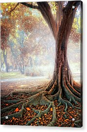 Big Tree Root Acrylic Print by Zu Sanchez Photography