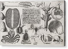 Biological Illustrations, 17th Century Acrylic Print by Middle Temple Library