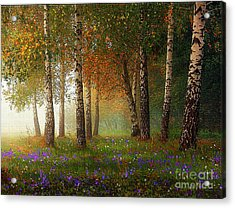Birch Meadow Acrylic Print by Robert Foster