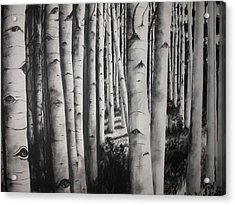 Birch Acrylic Print by Scott Robinson