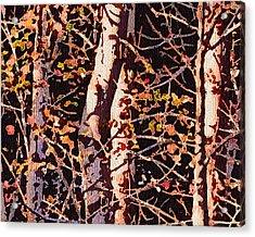 Birch Tapestry Acrylic Print