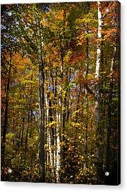 Birch Trail Acrylic Print by Jo-Anne Gazo-McKim