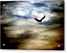 Bird 73 Acrylic Print