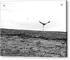 Bird And Beach Acrylic Print