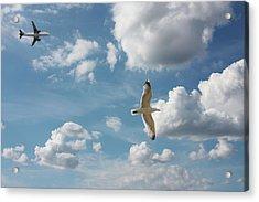 Bird And Flight Agaisnt Sky Acrylic Print by Fahid Chowdhury