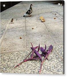 Bird And Flowers Acrylic Print by Todd Sherlock