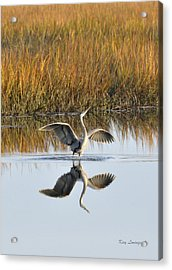 Bird Dance Acrylic Print