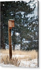 Bird Home Acrylic Print by Amee Cave
