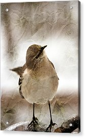 Bird In A Bag Acrylic Print by Skip Willits