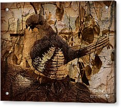 Bird In Brown Acrylic Print