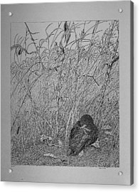 Acrylic Print featuring the drawing Bird In Winter by Daniel Reed
